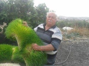 cyprus_hydroponics_fodder